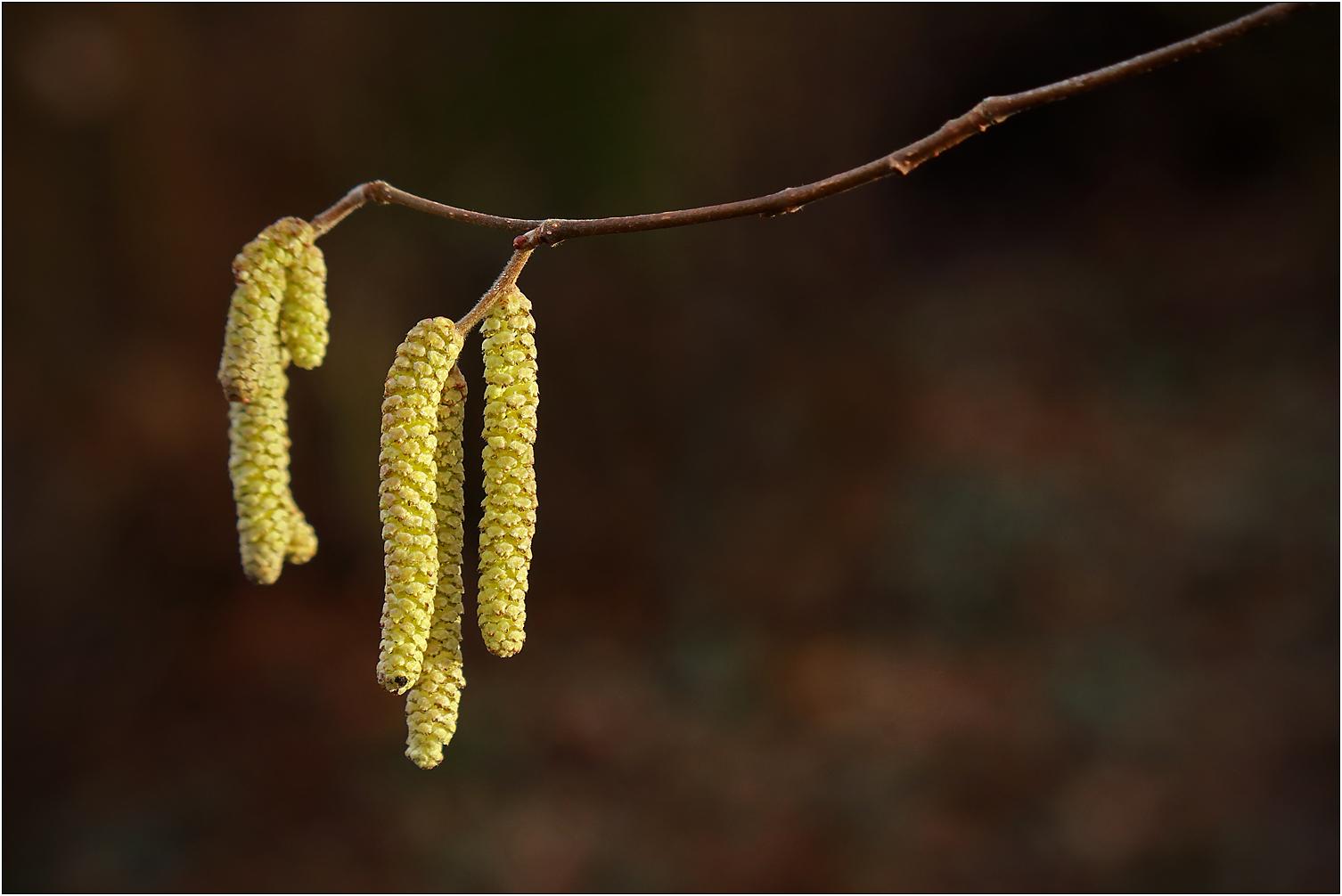 Ist das schon Frühling...?