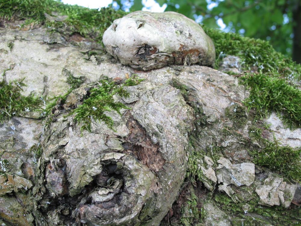 Ist der Baum krank ?