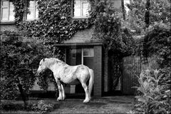 ist der Ist der Garten noch so klein , ein Pferd muss rein !