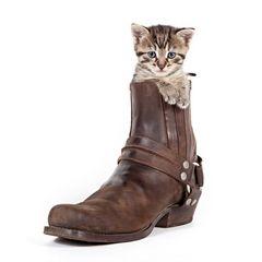 Ist der Stiefel zu groß, sind die Pfoten zu klein
