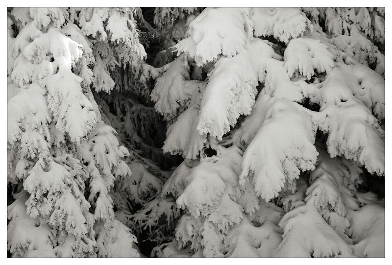 Ist doch Schwachsinn, den Schwarzwald auch im Winter immer noch Schwarzwald zu nennen