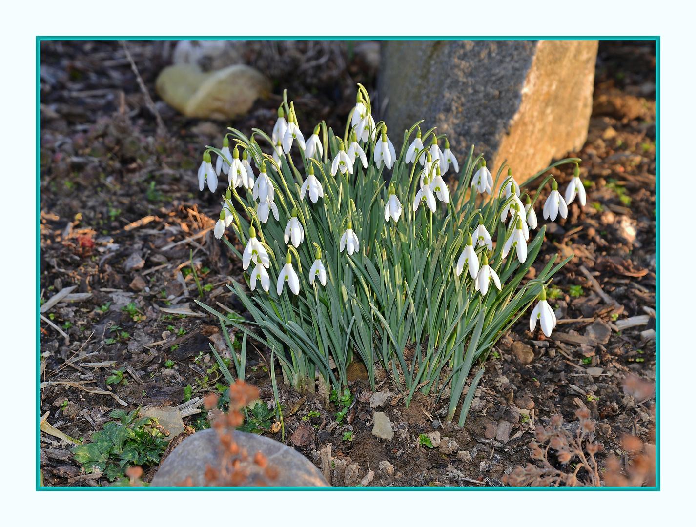 Ist es jetzt Frühling oder nicht ???