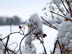 °°° Ist es nicht fein mit ein bissl Schnee auf den Bäumen und Sträuchern °°°
