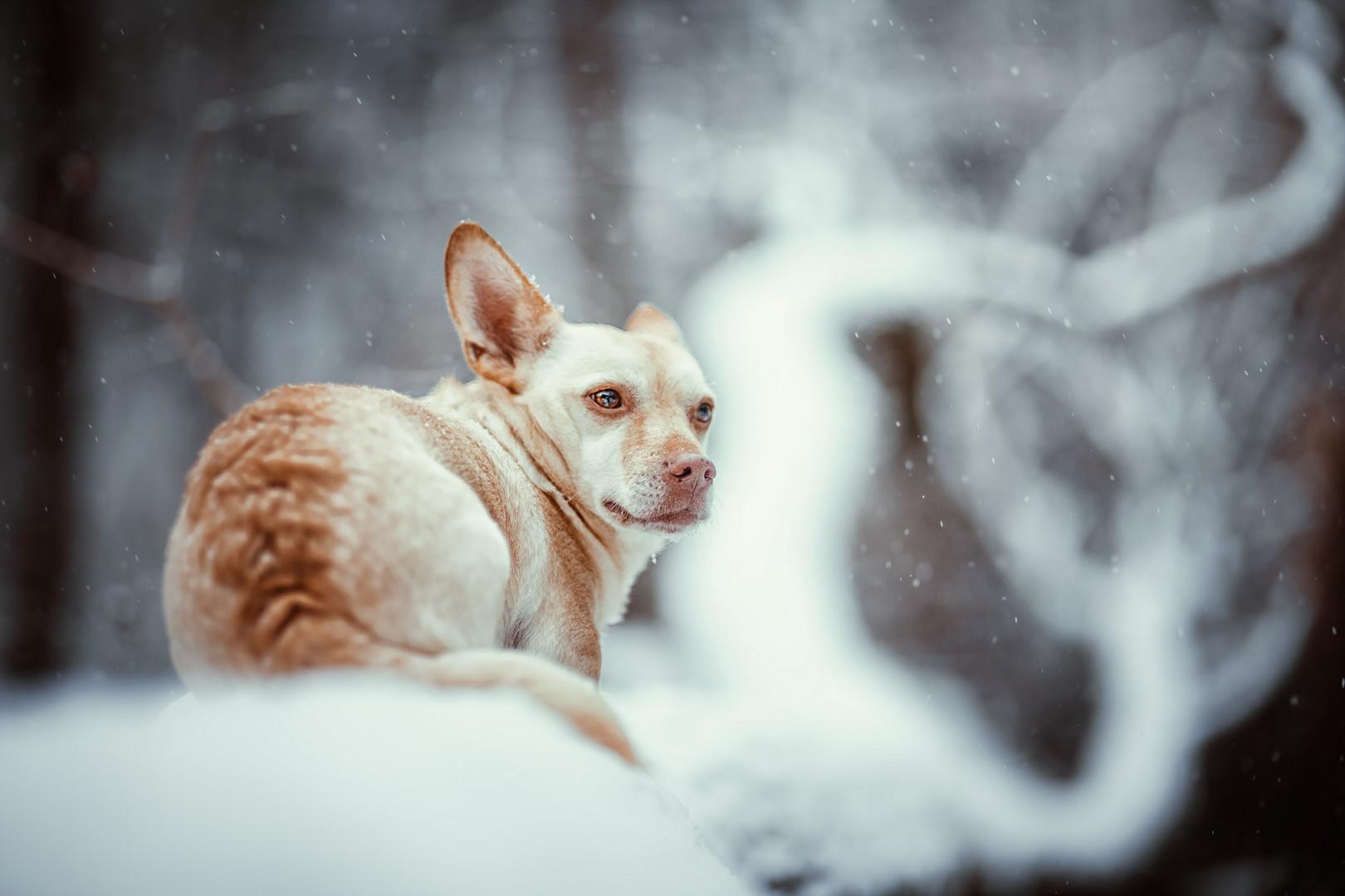 Ist So Kalt Der Winter Foto Bild Wald Kalt Winter Bilder