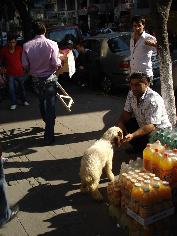 Istanbul - a lamb in the street