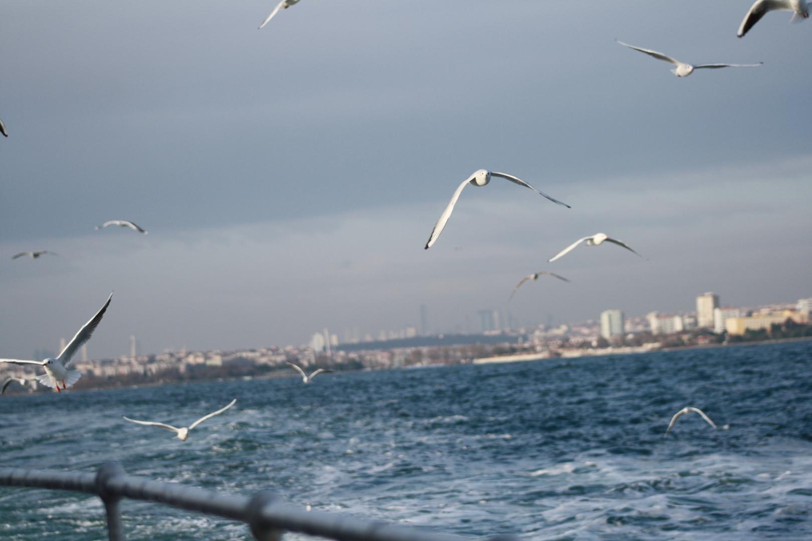 Istanbul und Möven