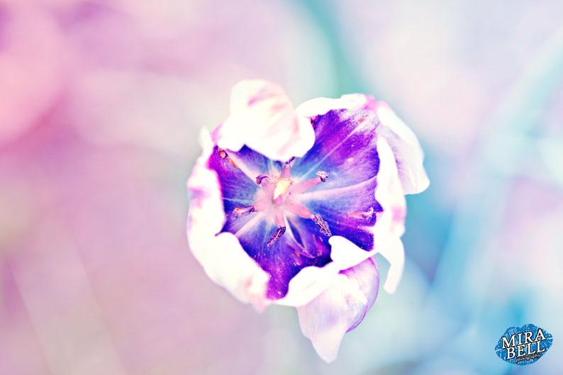 it blooms