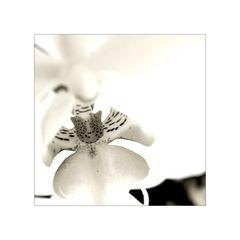it's a lily...