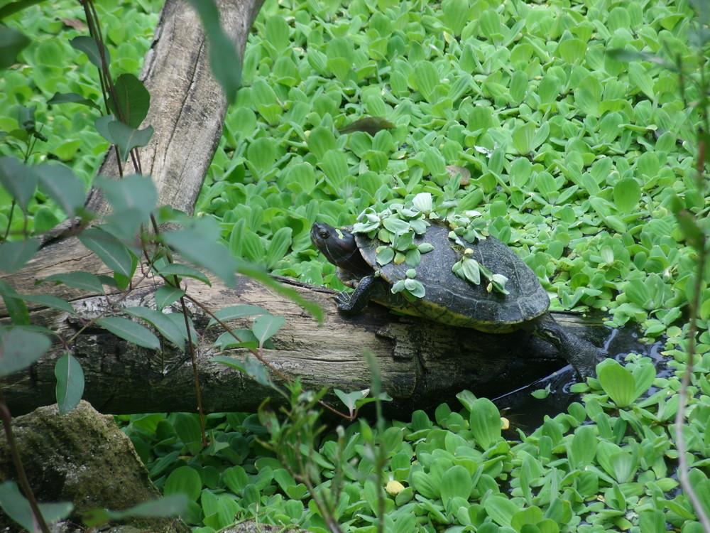 It's a turtle!