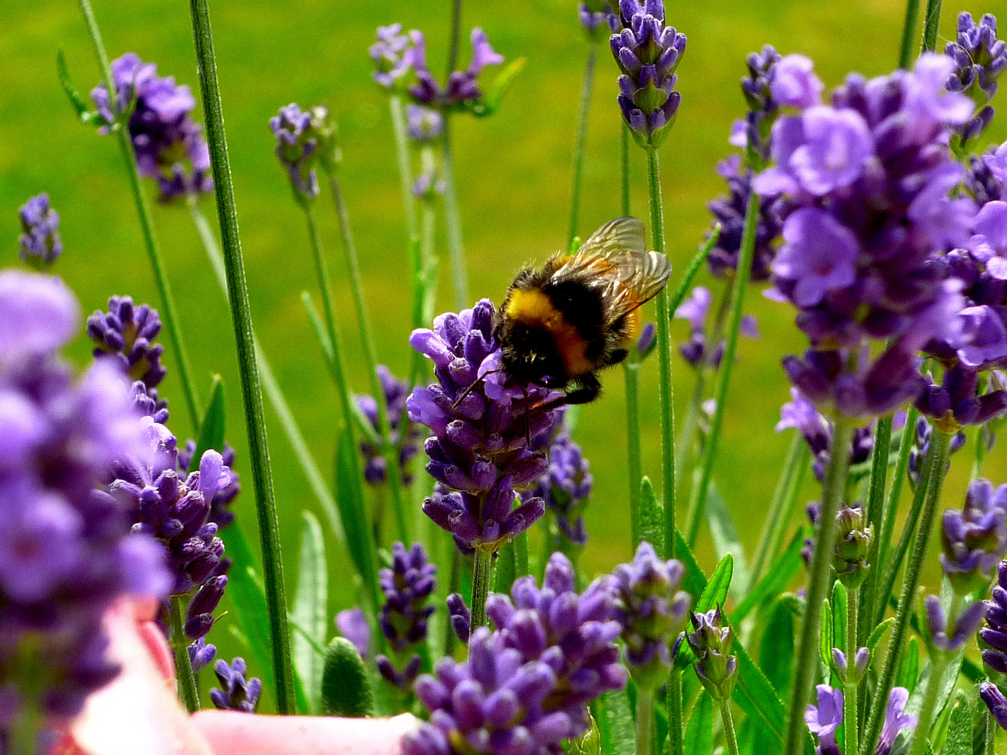 It´s Bee Sommer time