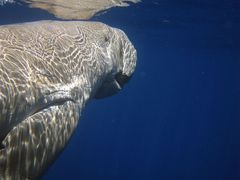 It's Dugong -Time!