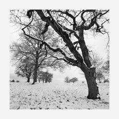- it´s winter -