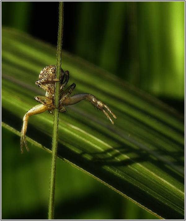 itsi-bitsi spider....