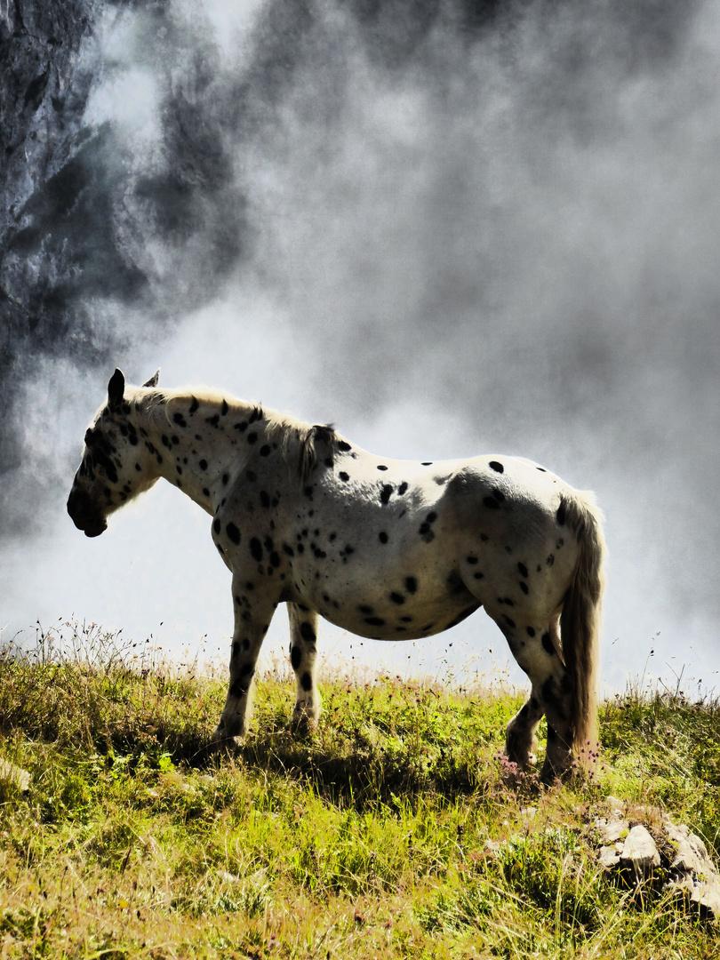 I'v got a mule to ride