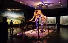IVLT3538 mammouth