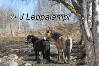 J Leppälampi
