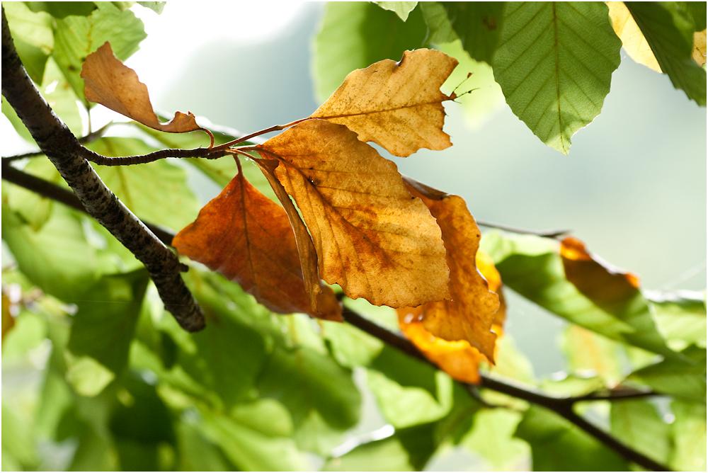 ja, is' denn scho' Herbst?