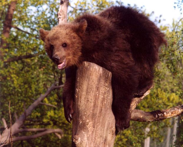 Ja, ist es denn wahr, dass Du der liebe Huddel-Tuddel-Knuddel-Bär sein tust?