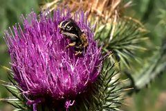 Ja ja, die Bienen....