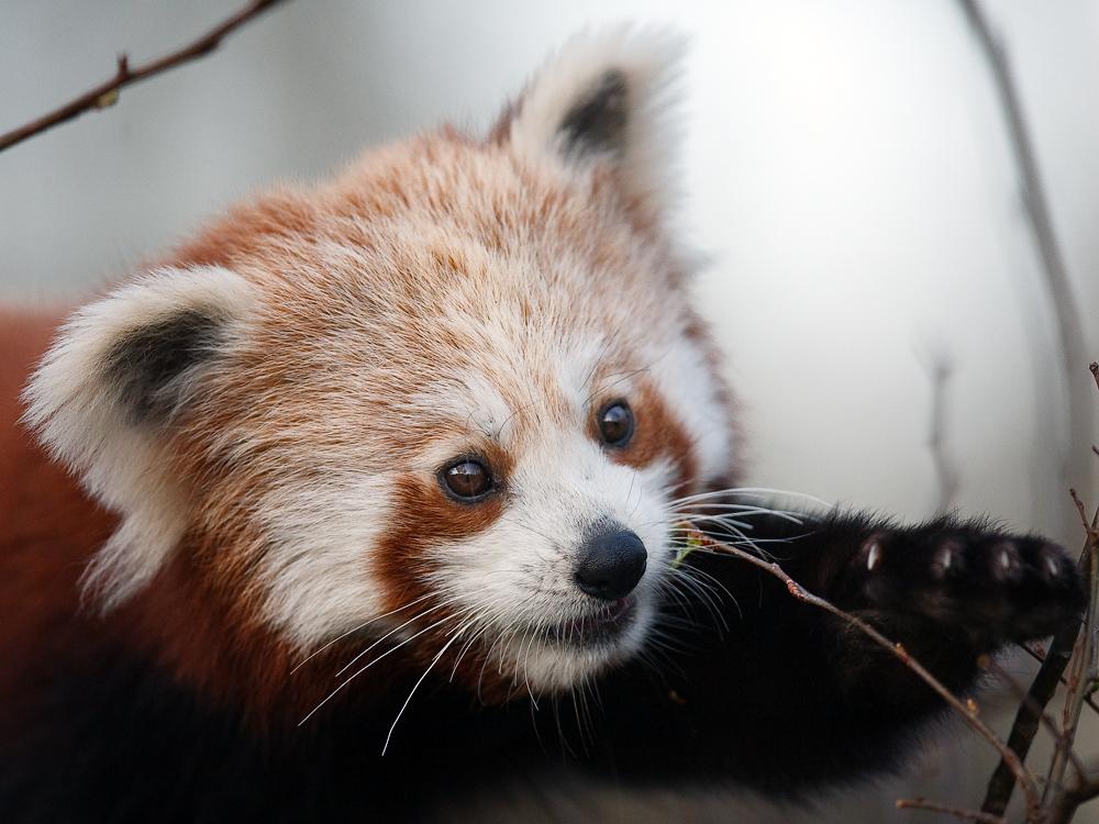 ja, ja - ich habe schon einmal einen kleinen Panda hochgeladen ...