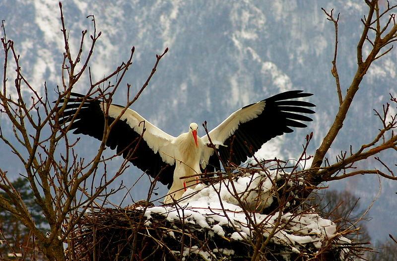 Ja - So groß sind meine Flügel