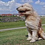"""...""""ja so schaut's, wenn der Wind von vorn weht""""..."""