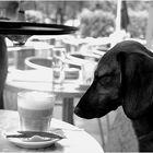 ...ja und ich kann jetzt den Macchiato nur KLEIN für meinen Hund bestellen. Ein Jammer ! und...
