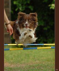 Jack beim Trainieren (Sommer '06)