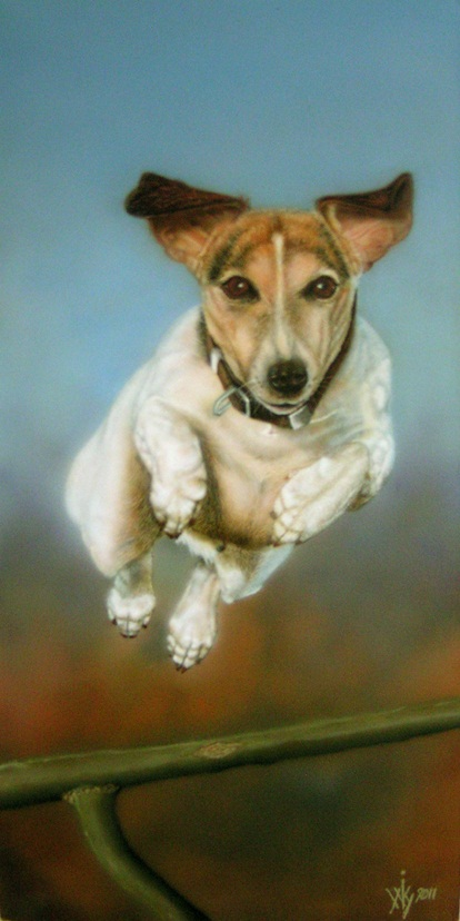 Jack Russel in action