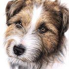 Jack Russell Portrait