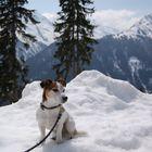 Jack Russell Terrier in den Alpen