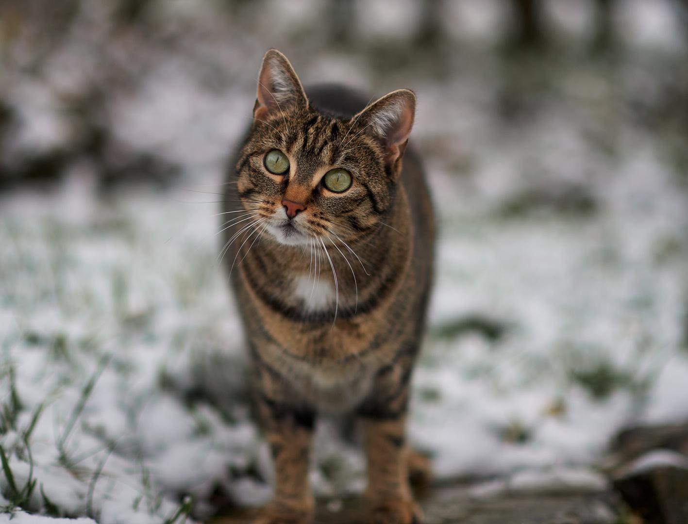 Jacky im Schnee No1