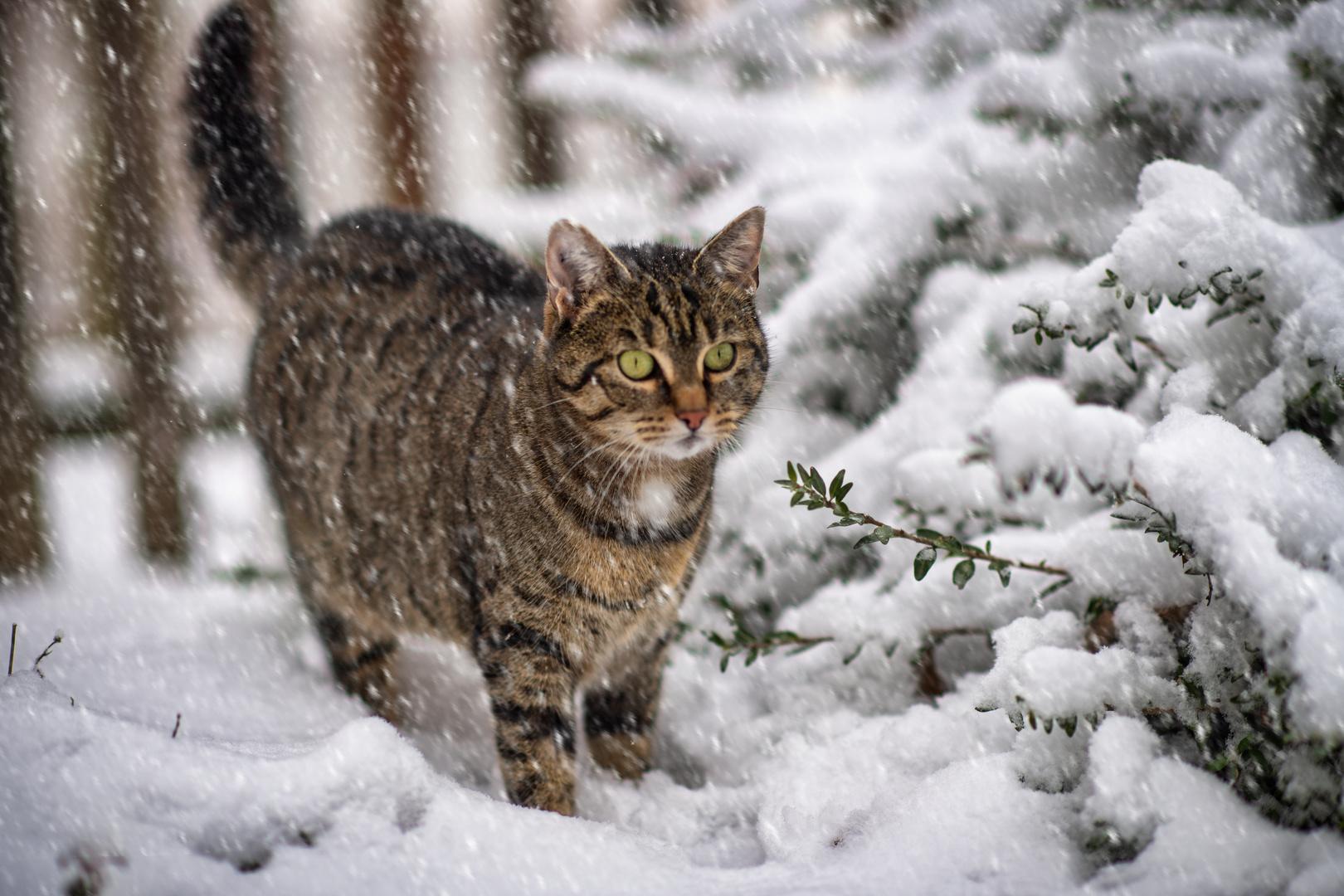 Jacky im Schnee No.3