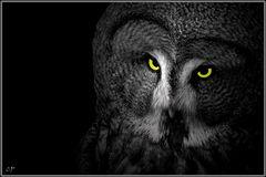 Jäger der Nacht IV