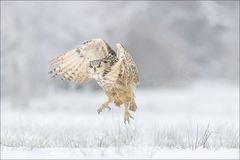 Jäger im Schnee...