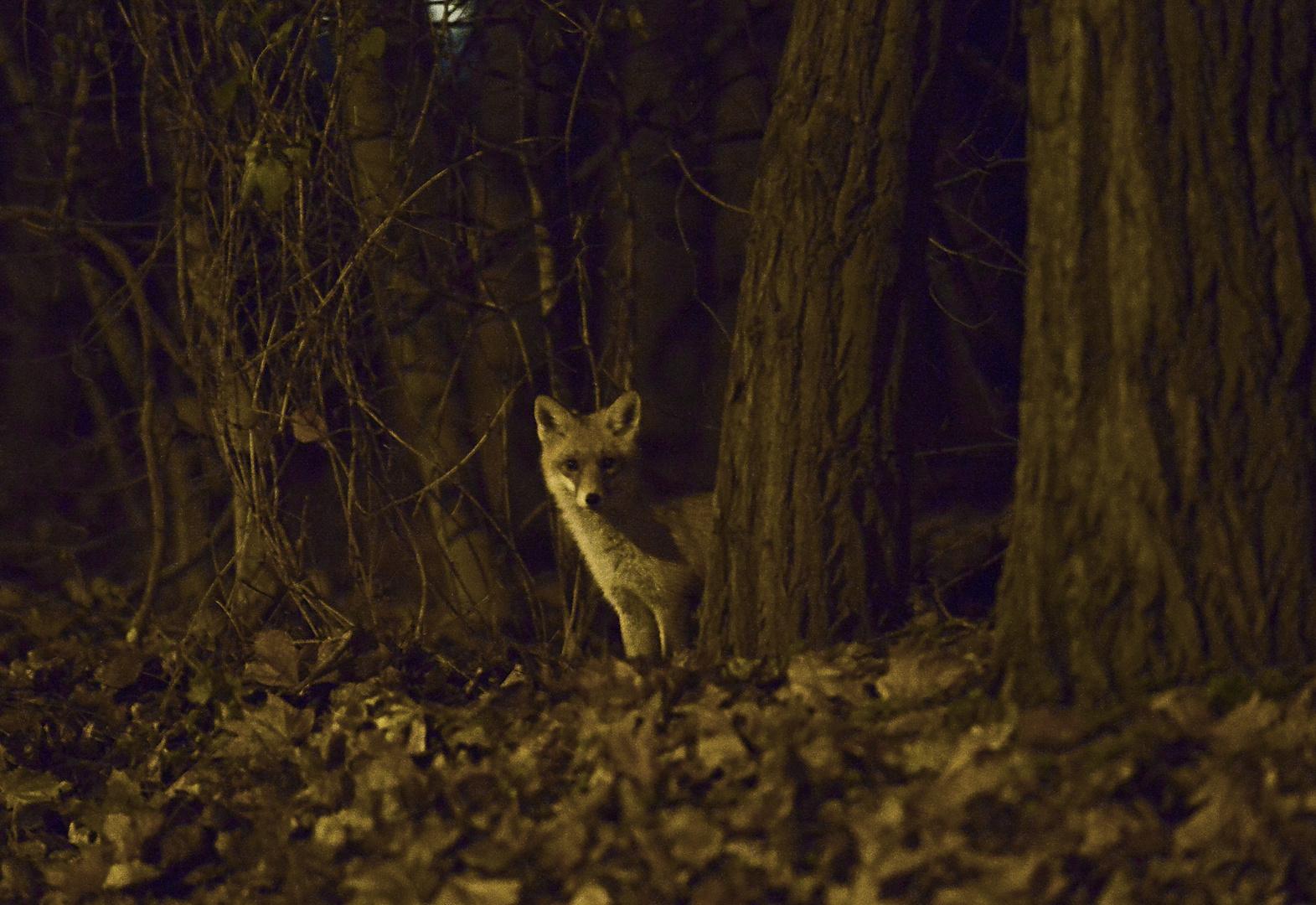 Jäger in der Finsternis des Waldes - Hunter in the darkness of the forest