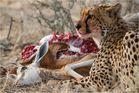 Jägerin und Opfer