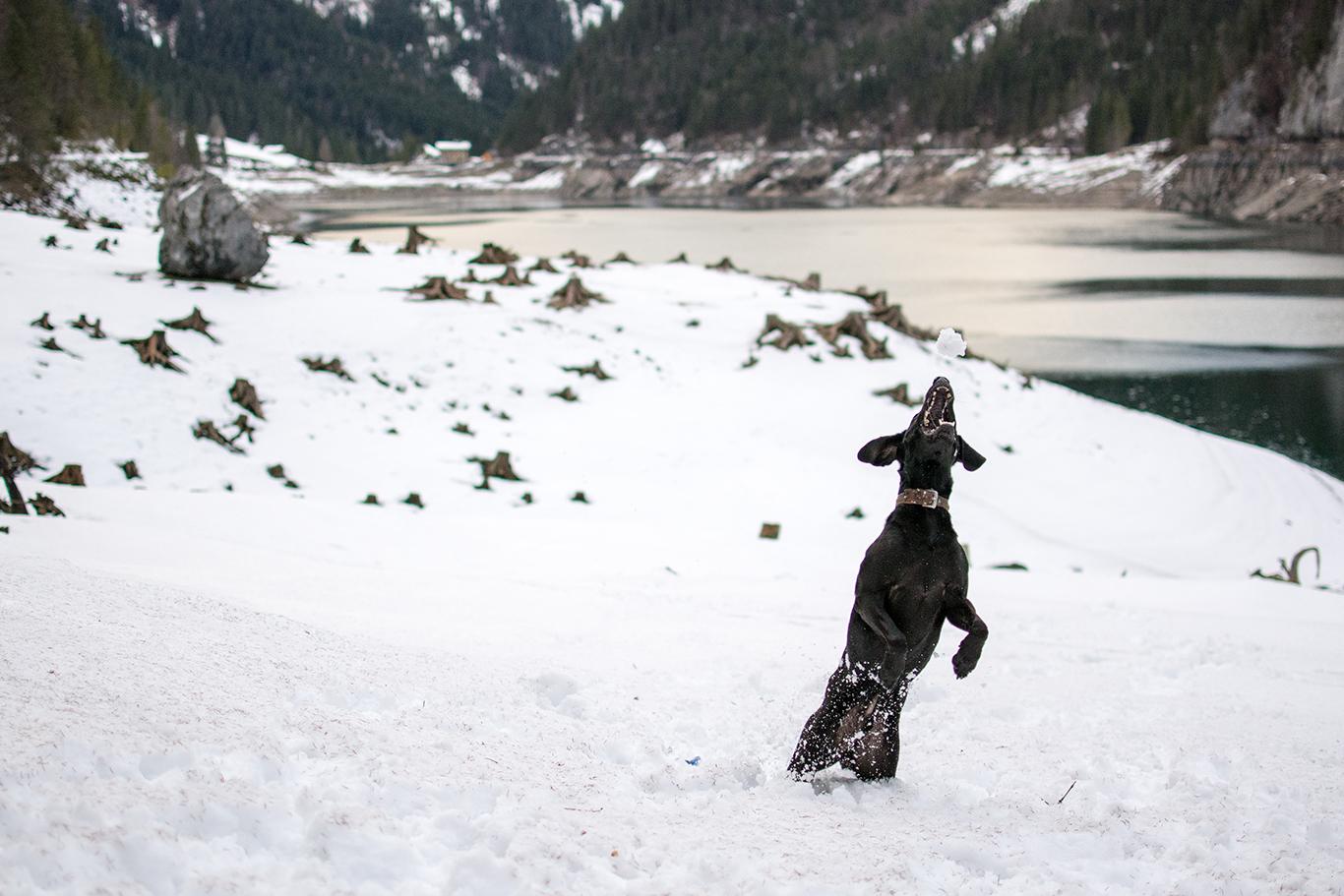Jagd auf/im Schnee