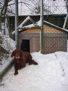 Jagdhund vor winterfester Eigentumshütte