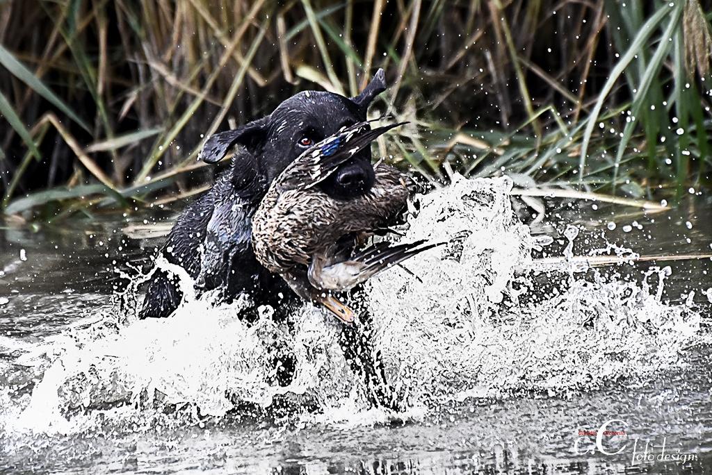 Jagdhunde Training