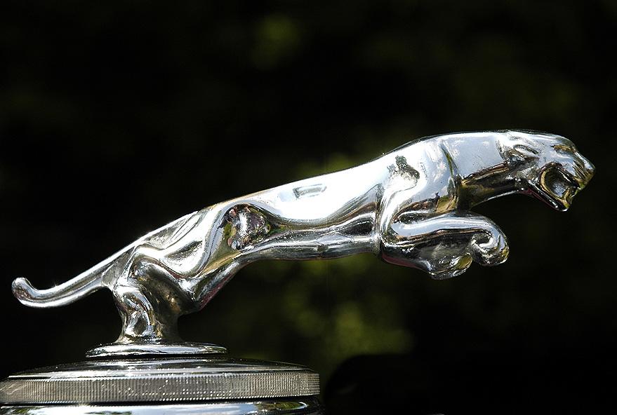 Jaguar auf dem Sprung