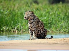 Pantanal_2019