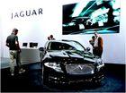 Jaguar - die Raubkatze in dir?