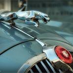 Jaguar ...