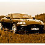 Jaguar in freier Wildbahn (sepia)