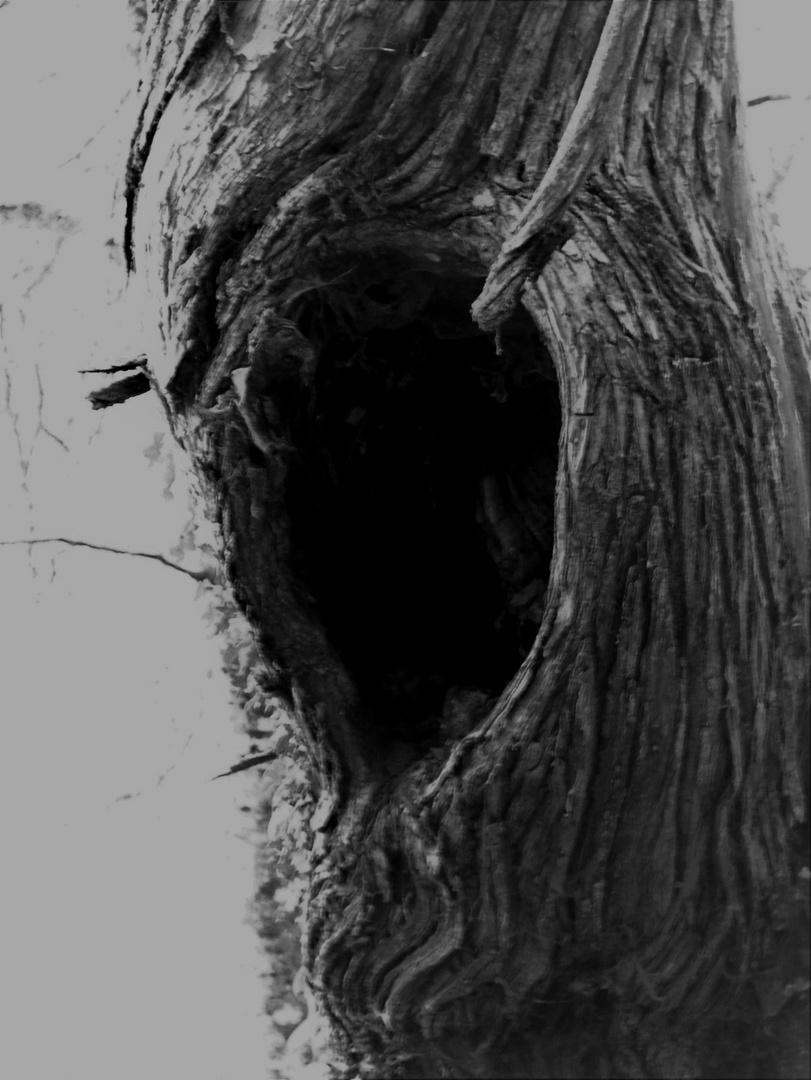 j'ai peur dans la forêt 2