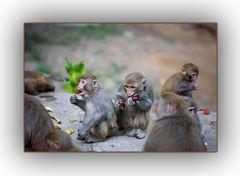 Jaja, die Affen