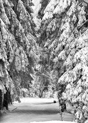 Januar 2011 - Schneegestöber