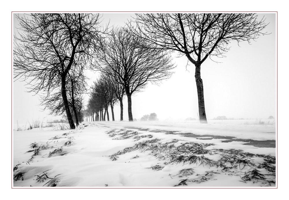 Januar in den Baumbergen
