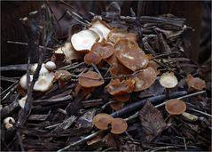 Januar-Pilze ...